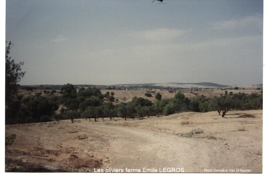 Champ d`oliviers ferme LEGROS